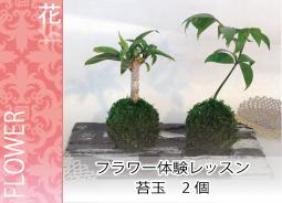 苔玉2個 -東京新宿の陶芸教室 プロップスアートスクールで陶芸体験-の画像