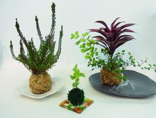 苔だま*フラワー -東京新宿の陶芸教室 プロップスアートスクールで陶芸体験-の画像